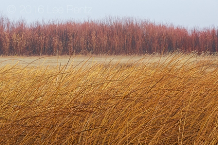 Autumn Textures in Malheur National Wildlife Refuge