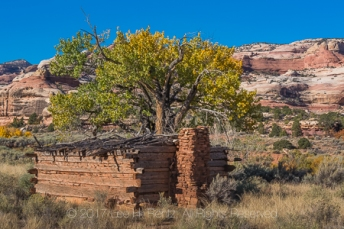 Kirk's Cabin, built as a seasonal shelter by a rancher, with adzed logs and a sandstone chimney, in Salt Creek Canyon in The Needles District of Canyonlands National Park, Utah, USA