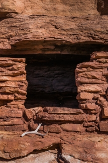 Ancestral Puebloan House with a Mule Deer, Odocoileus hemionus, antler within Salt Creek Canyon in The Needles District of Canyonlands National Park, Utah, USA