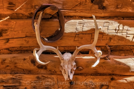 Mule Deer antlers used as a trophy decoration in Kirk's Cabin in Salt Creek Canyon in The Needles District of Canyonlands National Park, Utah, USA
