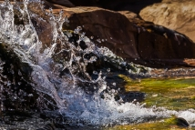 Salt Creek, a perennial stream that is laden with fine sediment and bordered with algae, but is drinkable, within Upper Salt Creek Canyon in The Needles District of Canyonlands National Park, Utah, USA
