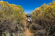 Karen Rentz with tall Rubber Rabbitbrush, Ericameria nauseoa, along the trail within Salt Creek Canyon in The Needles District of Canyonlands National Park, Utah, USA