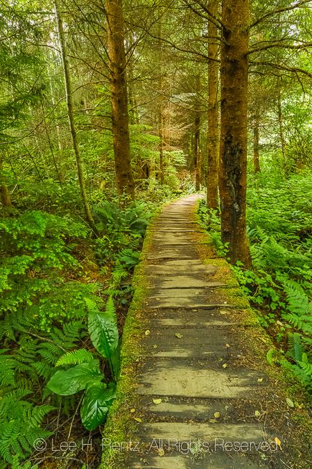 Boardwalk along Trail to Shi Shi Beach through the Makah Reserva