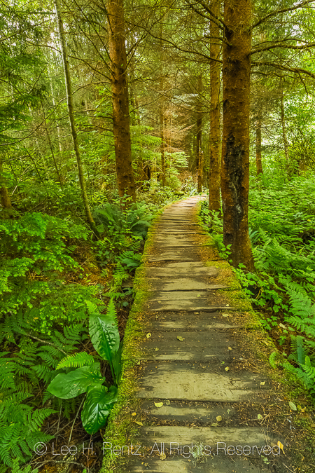 Boardwalk along Trail to Shi Shi Beach through the Makah Reserva