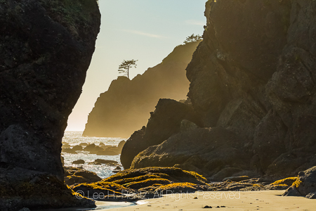Point of Arches in Olympic National Park