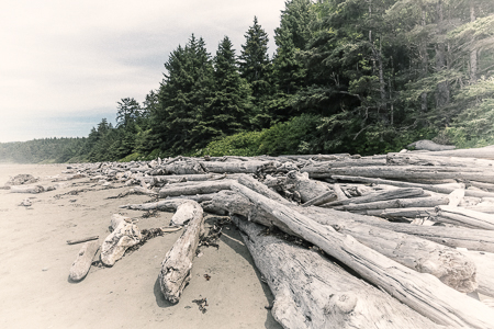 Driftwood Logs on Shi Shi Beach in Olympic National Park