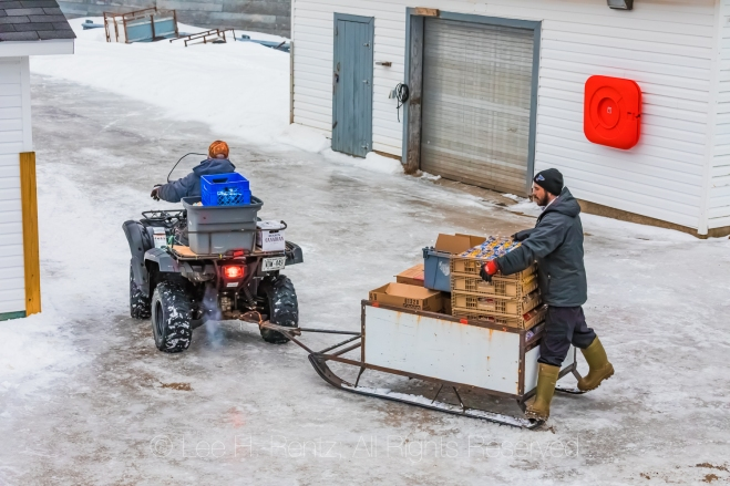 ATV Transporting Cargo from Ferry to Store in the Outport of Gre