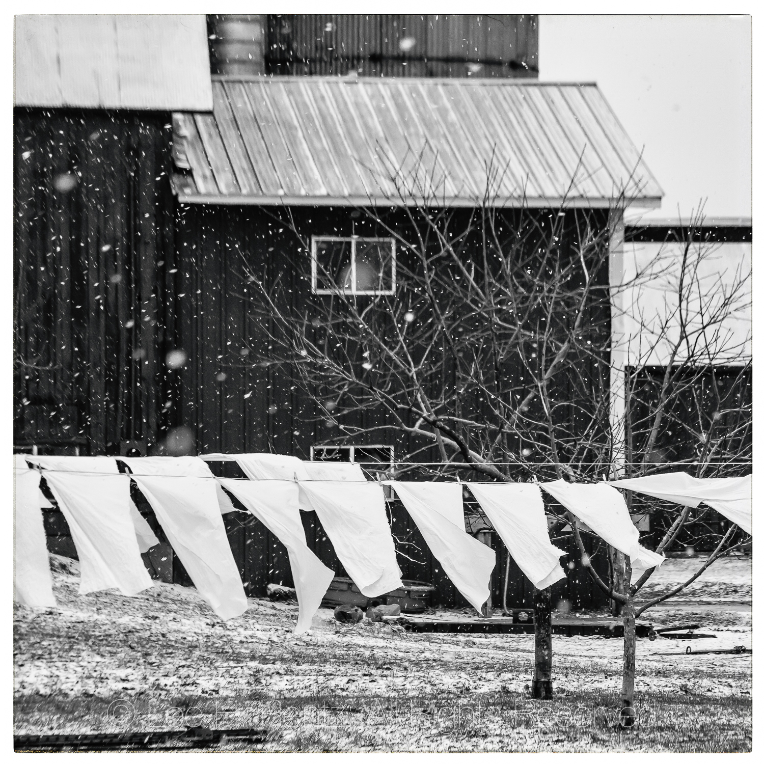 Clothesline in an Amish Community in Central Michigan