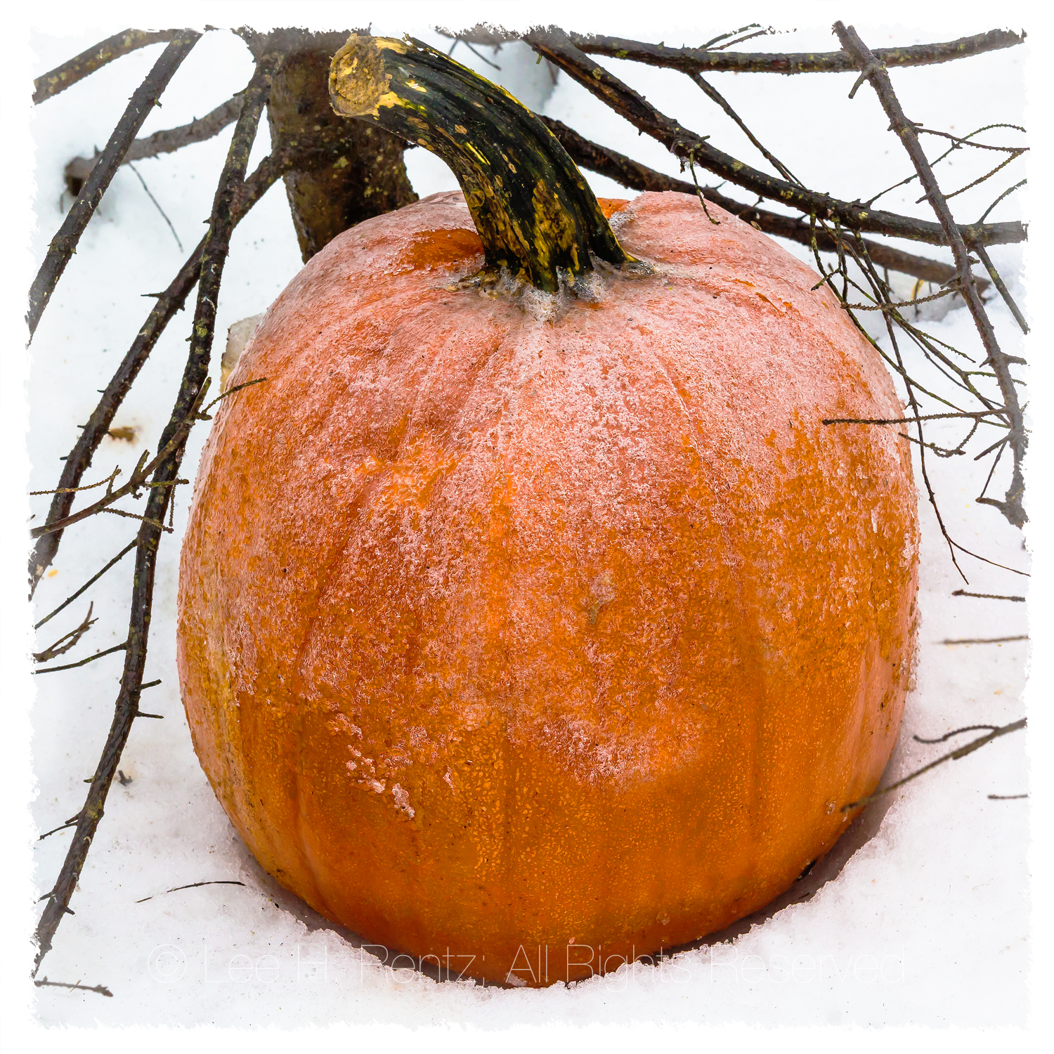 WHEN FROST IS ON THE PUMPKIN