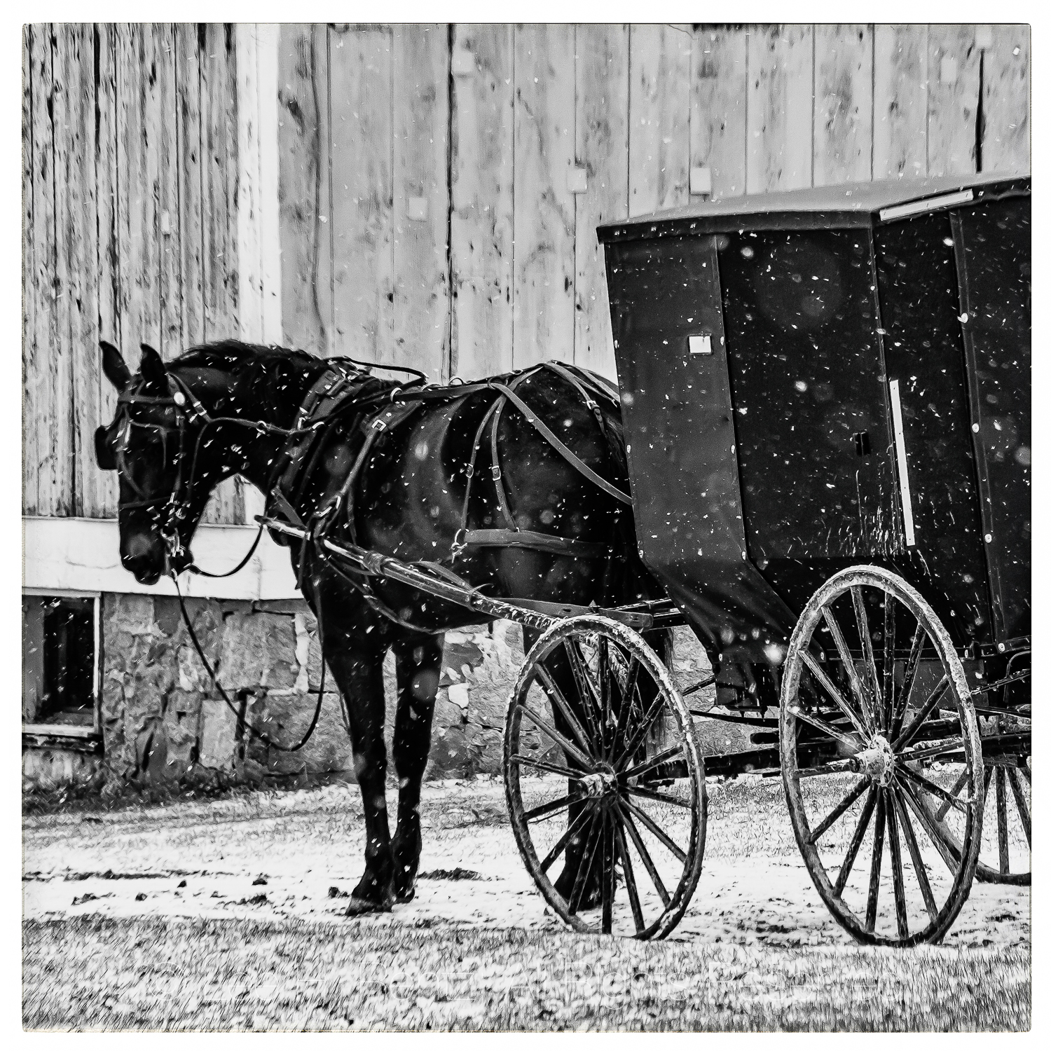 Horse-drawn Buggy in an Amish Community in Central Michigan
