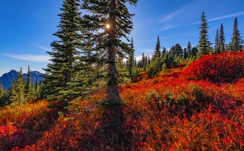 Autumn in Paradise